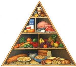 مواد مغذی اصلی